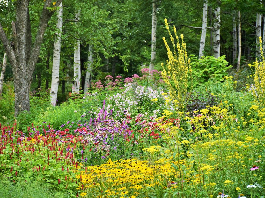 【大雪森のガーデン】森の花園/ハーブや野草などの多様な植物で構成されるガーデン(8月下旬)