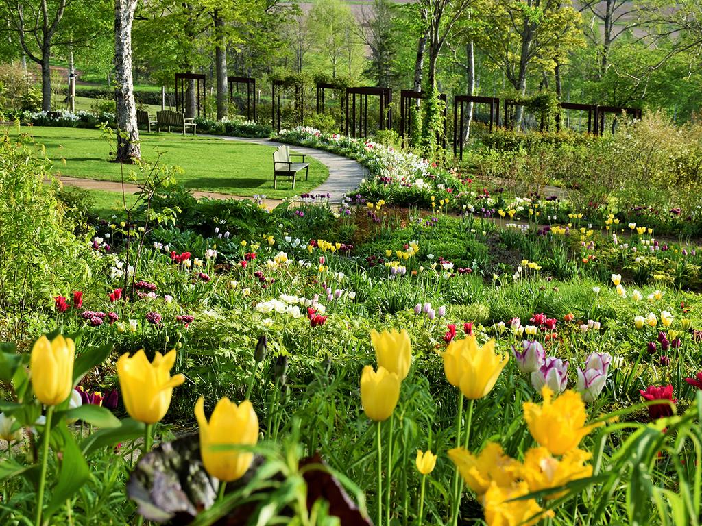 【大雪森のガーデン】森の花園/色彩豊かな季節の花を楽しめます(5月下旬)