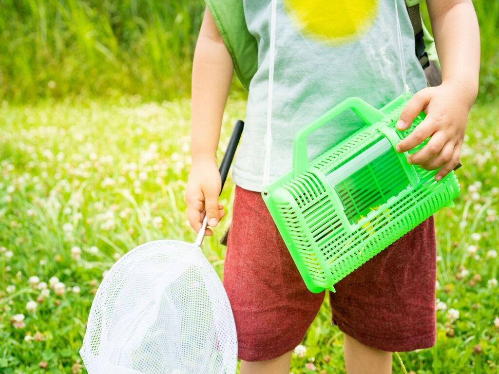 虫取りセットを持って昆虫採集へGO!※画像はイメージです