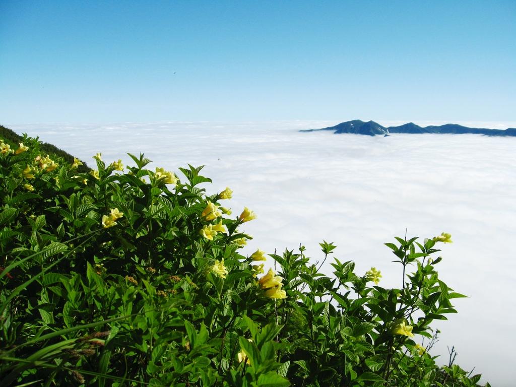 早朝の黒岳では雲海が広がる絶景に出会えるかもしれません