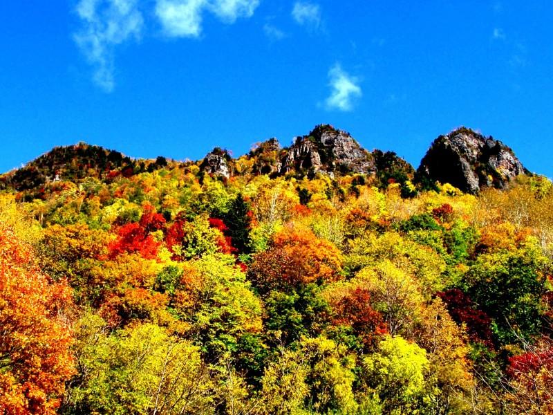秋の黒岳は日本で最も早く紅葉が始まり、色鮮やかに染まります
