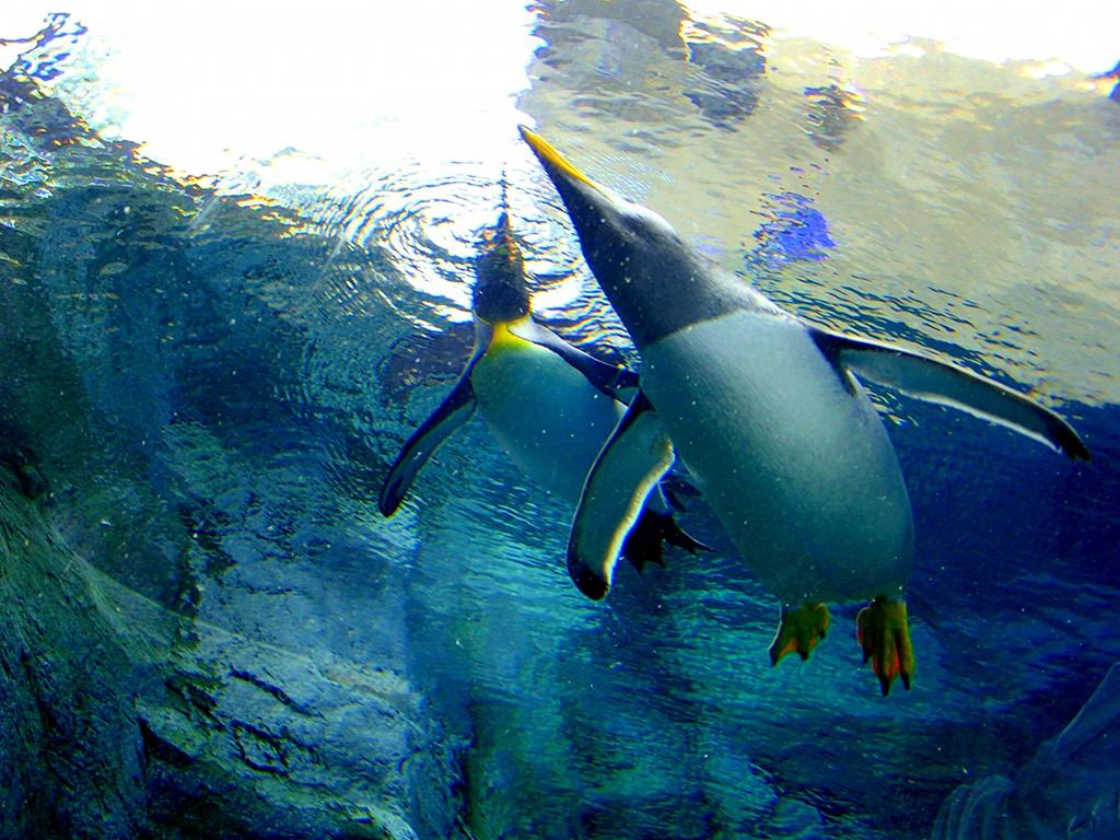 【旭山動物園】人気のペンギンを見に行こう!