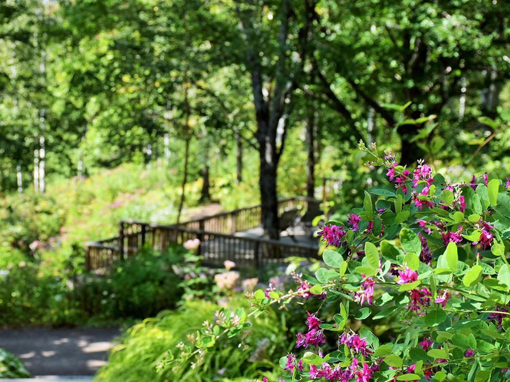 【大雪森のガーデン】森の迎賓館/花と緑に囲まれてリラックス(9月中旬)
