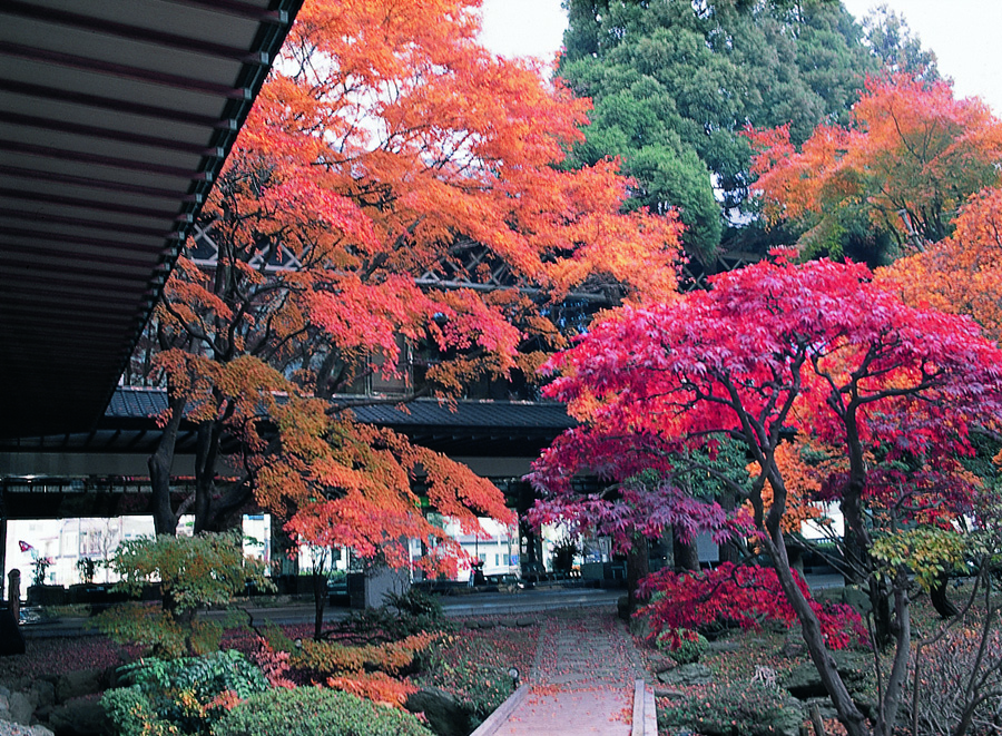 ロビーからは紅葉の庭園をお楽しみ頂けます。(例年10月〜11月の風景ですが、異なる場合がございます。)