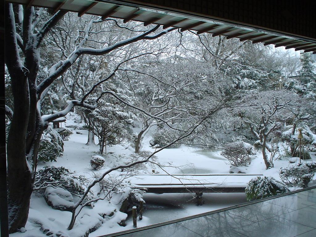 冬の庭園(例年12月〜3月の風景ですが、異なる場合がございます。)