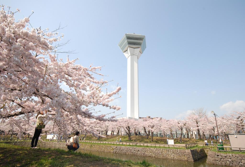 GWの函館は桜の見ごろ!