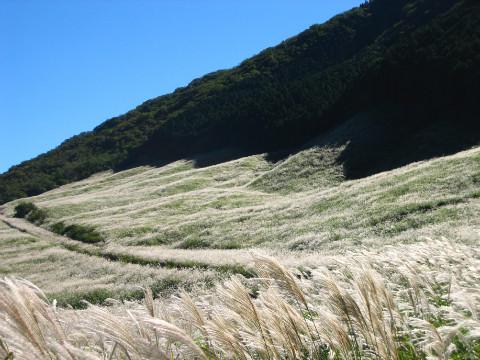 【秋】仙石原すすき草原