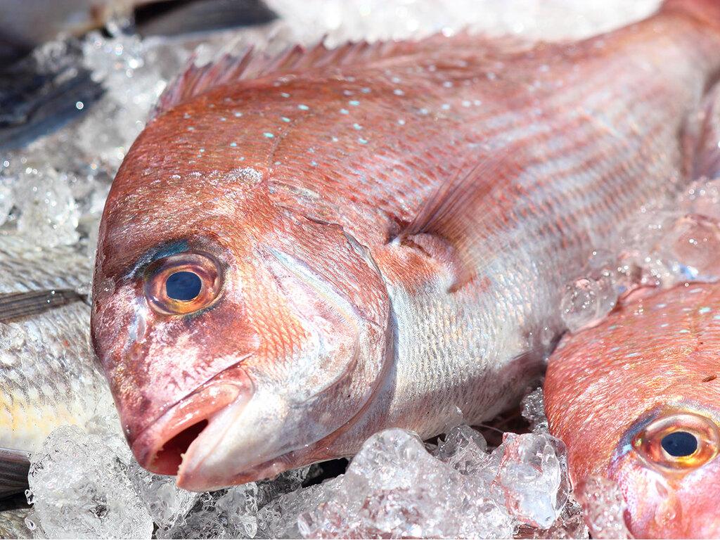 (イメージ)お祝いに鯛の姿造り
