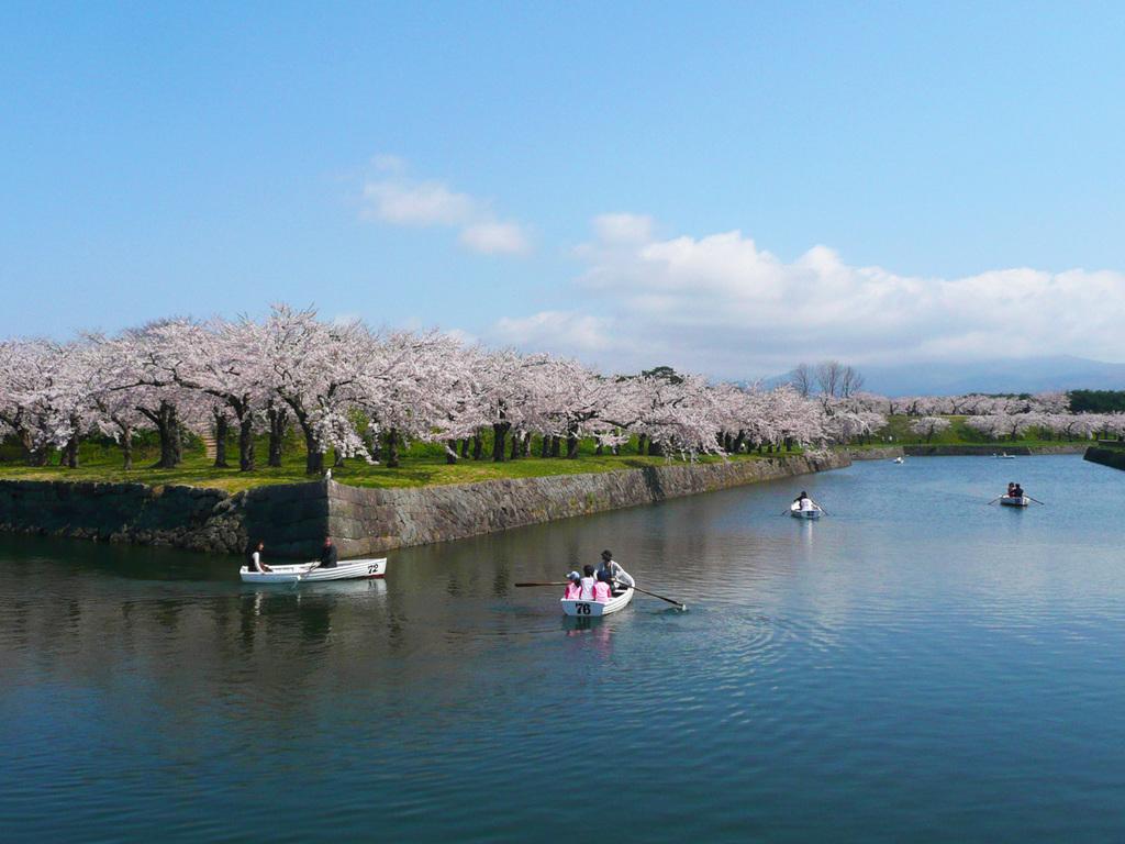 【春の五稜郭公園】桜の咲く頃、貸しボートでお堀の周遊もおすすめ。