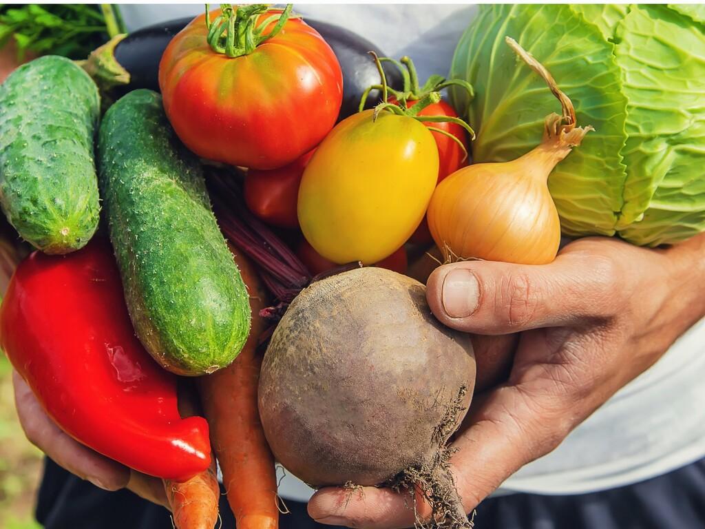 高原野菜収穫体験(イメージ)