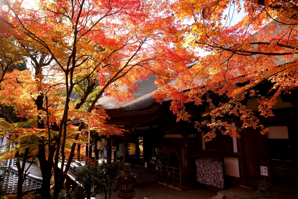 石山寺の紅葉 ©Biwako visitors bureau