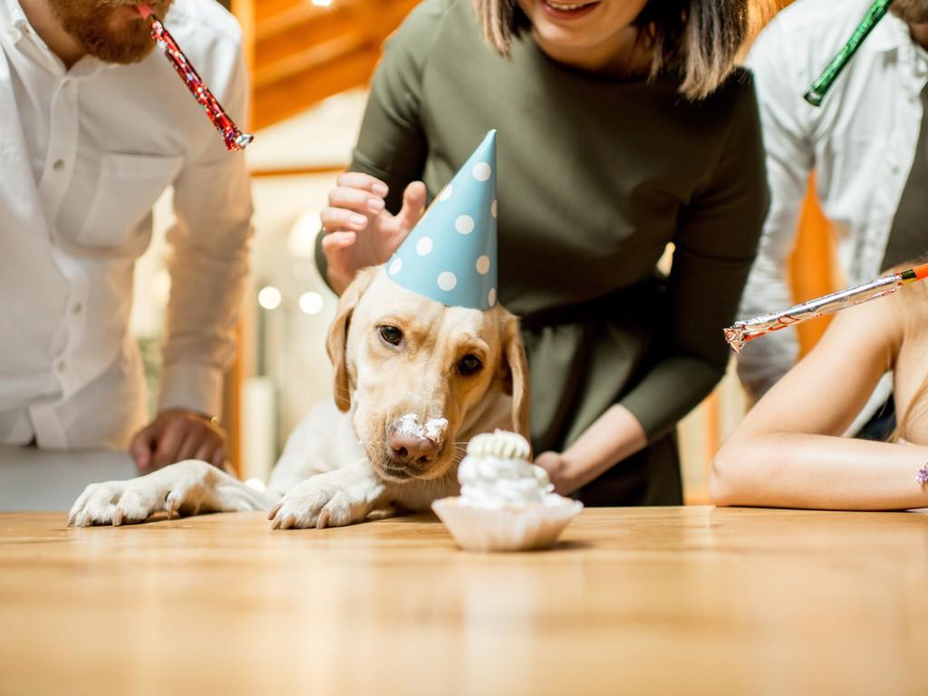 Dog Anniversary イメージ
