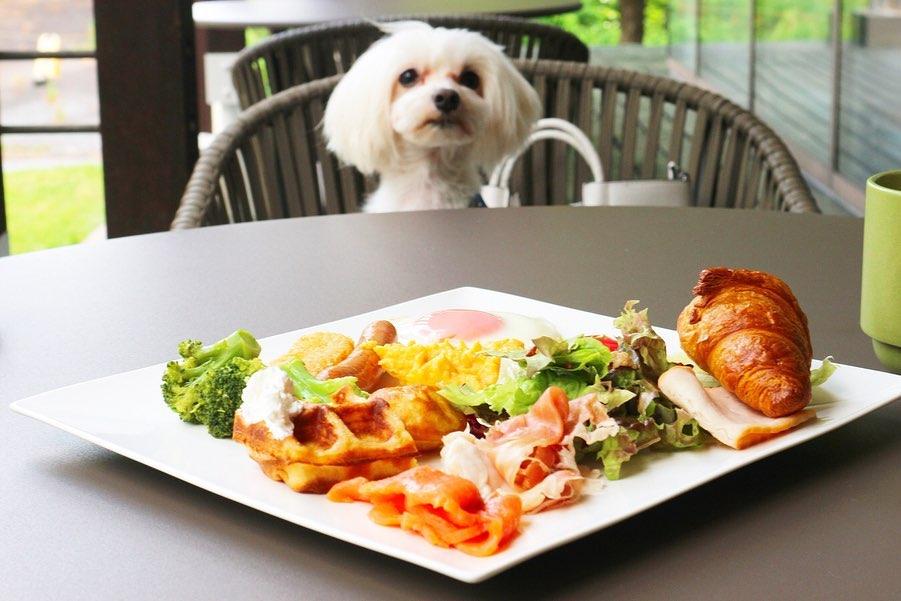 朝食も愛犬と一緒に
