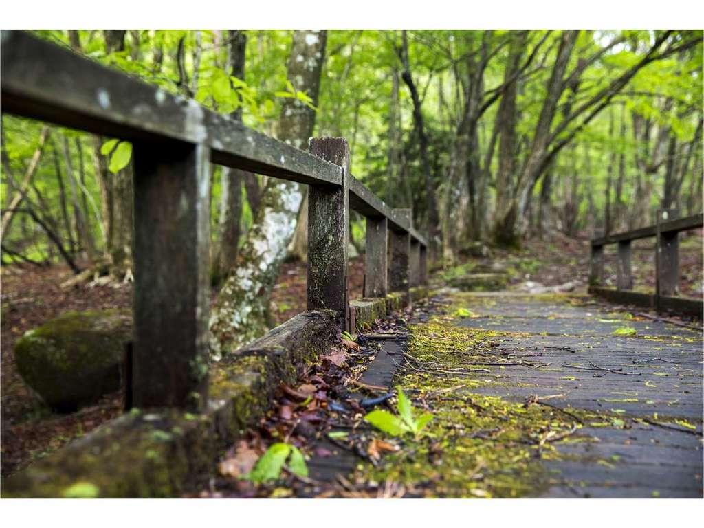 リラクシアの森 2
