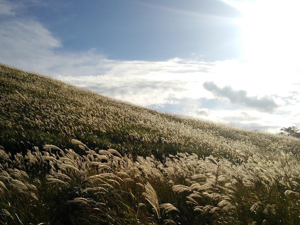 〜秋〜仙石原のすすき草原で深呼吸