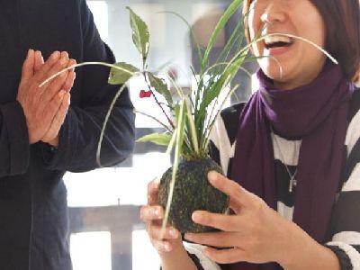 ころんとしたかわいらしい苔玉を創りませんか