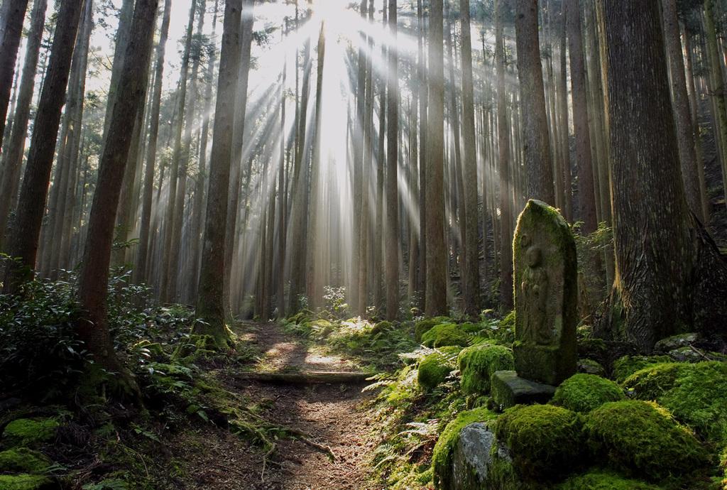 【4/1〜5/31】【GW前後『ずら泊』スペシャルプライス】世界遺産登録15周年を迎える『熊野古道』