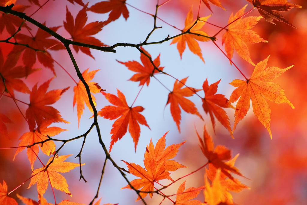 秋の季節限定プランです。(画像はイメージです)