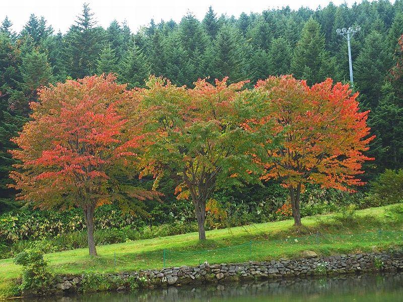 秋のニセコ