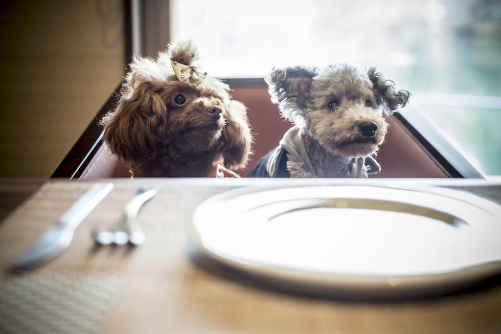 お食事はお部屋で愛犬と。
