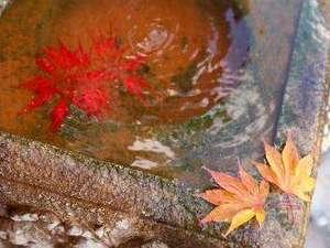 美しい紅葉。輝く陽光はもちろん、時に降る雨さえも葉の彩りを鮮やかに見せてくれます。