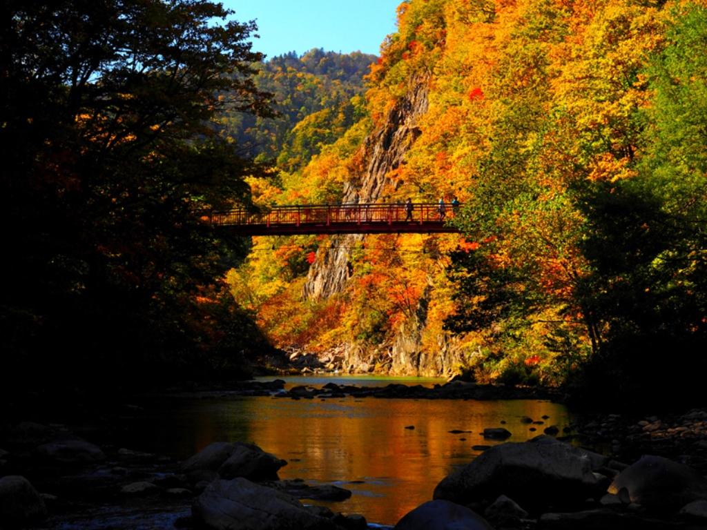 心地よいせせらぎをBGMに渓流散策。四季折々の景観に魅せられます。