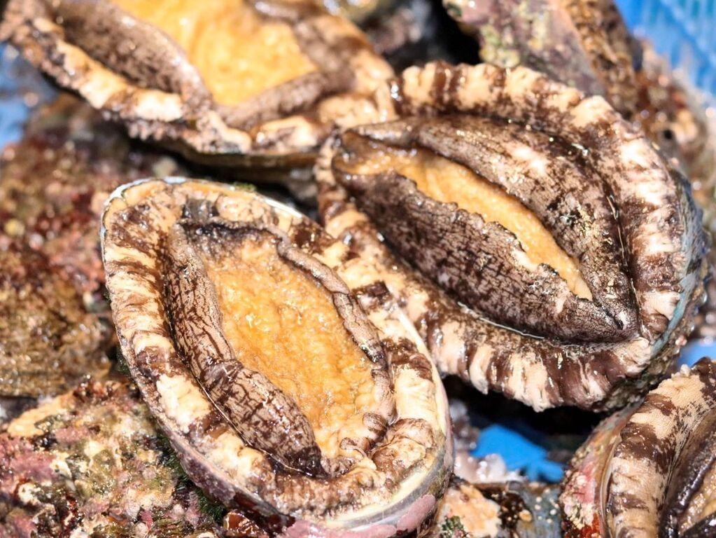 北海道の旬の食材を厳選。9月は「鮑」もお愉しみくださいませ。