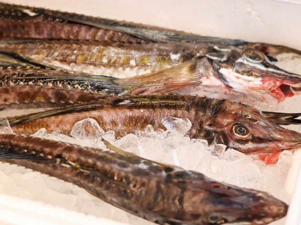 北海道の旬の食材を厳選。11月は「八角」もお愉しみくださいませ。