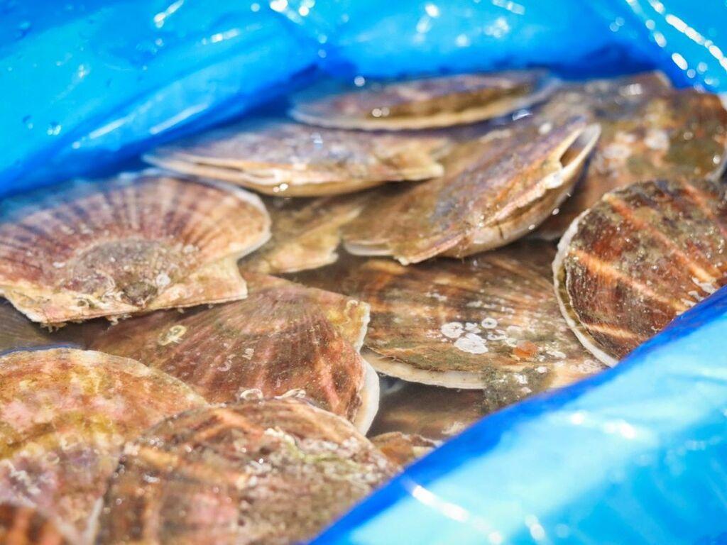北海道の旬の食材を厳選。1月は「帆立」もお愉しみくださいませ。
