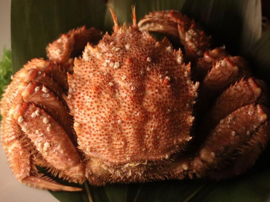 北海道の旬の食材を厳選。5月は「毛蟹」もお愉しみくださいませ。