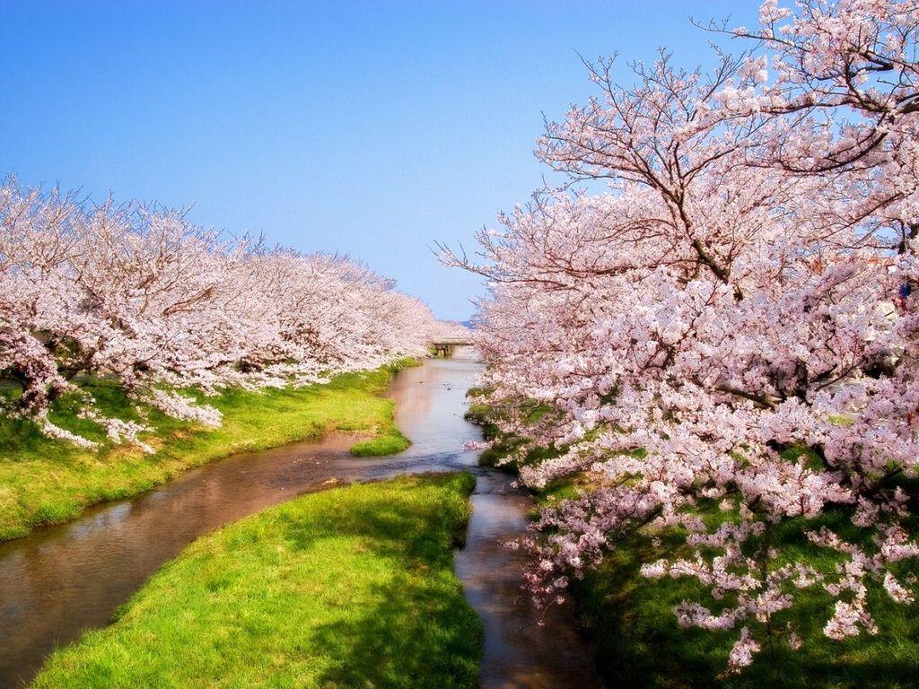 玉造温泉(春)