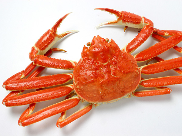 旬のずわい蟹を取り合わせた贅沢な一皿