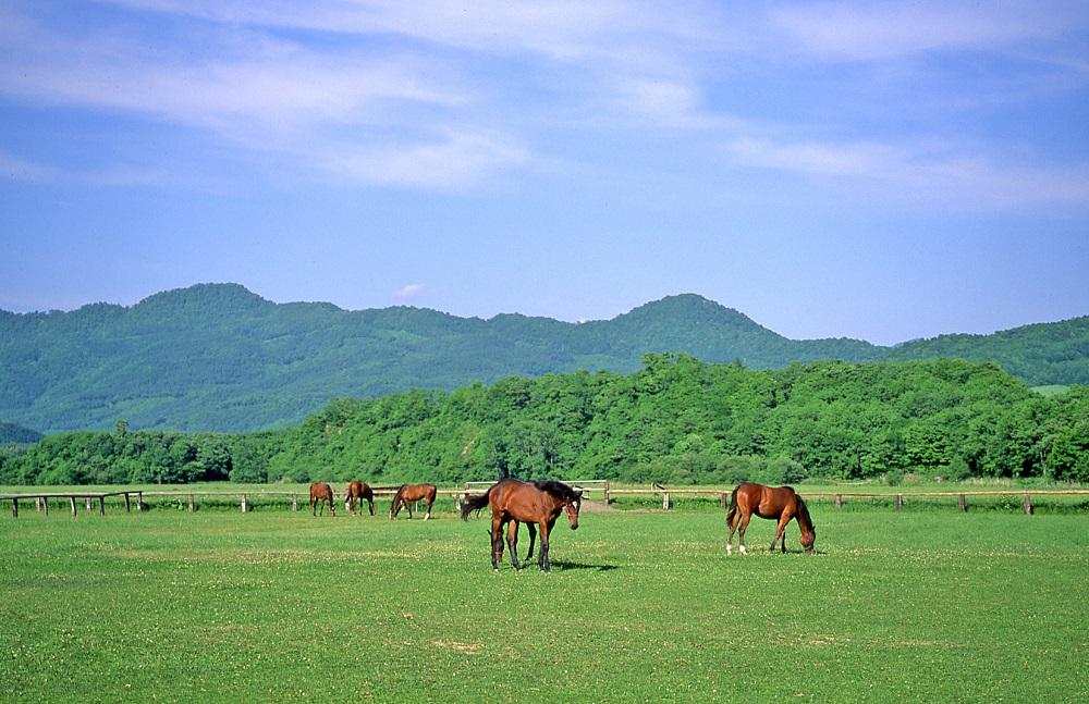 どこまでも広がるグリーンの牧草地。