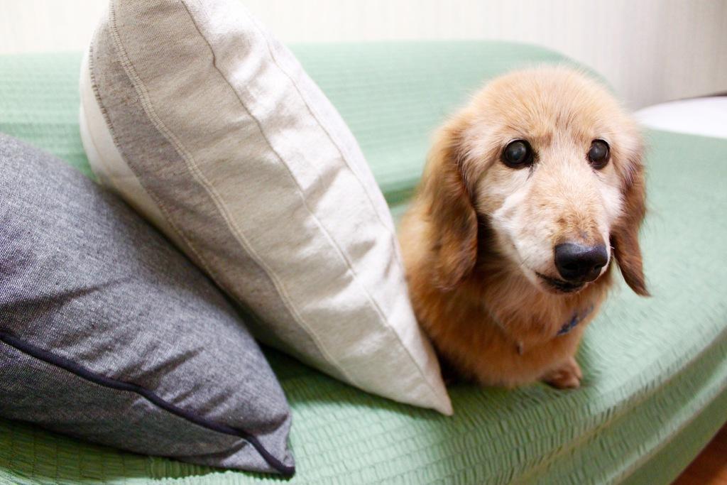 犬・猫・鳥などペットと一緒に泊まれる限定1室の洋室