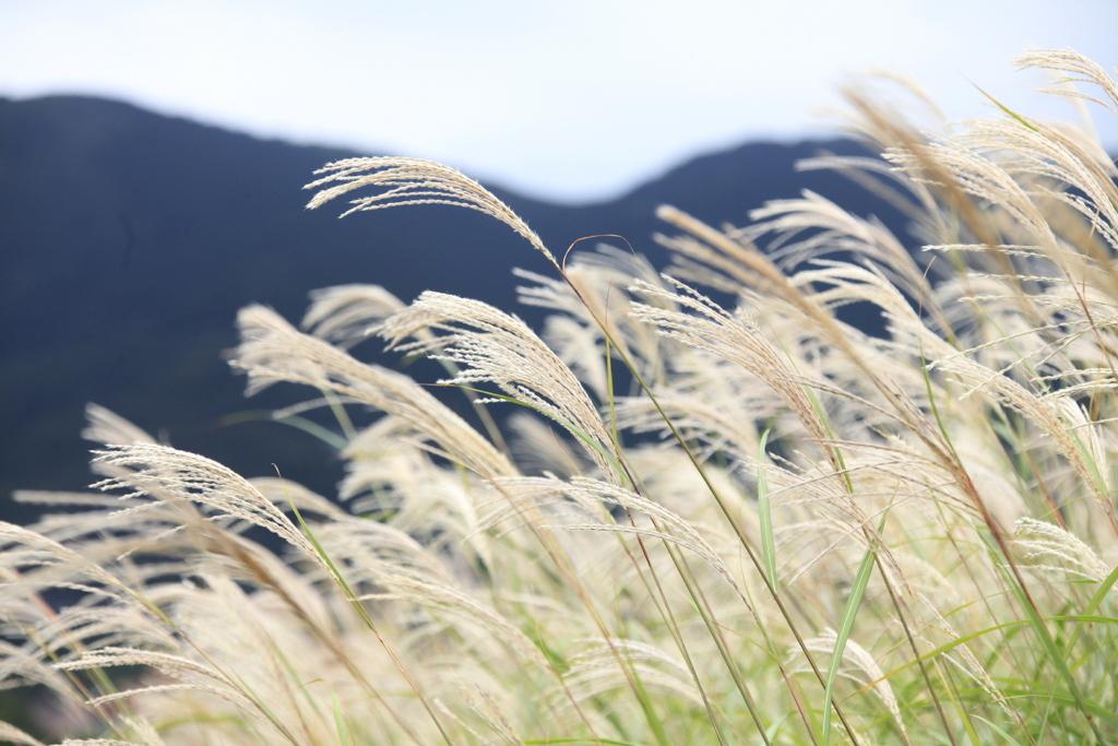 すすき高原を吹き抜ける心地良い風