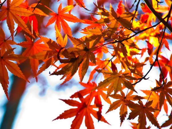 紅葉イメージ〜秋を満喫♪