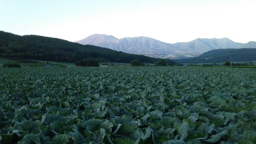 高原夏野菜をご自宅へお届け(イメージ)