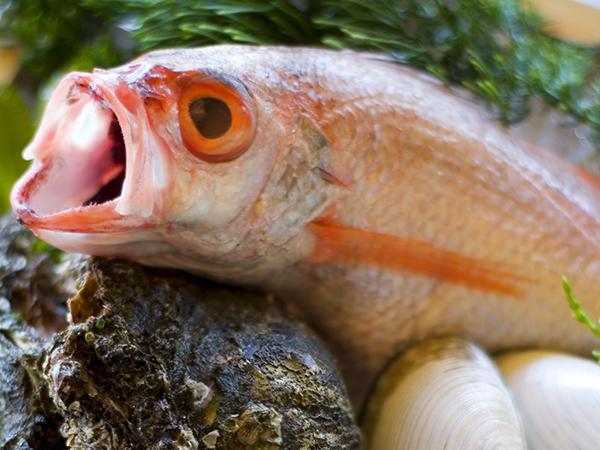 綺麗な赤いお魚の口を開くと、喉が真っ黒!!