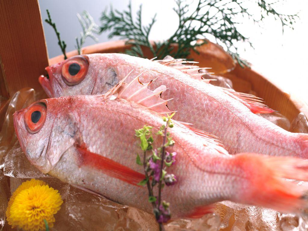 絶品高級魚 のどぐろ
