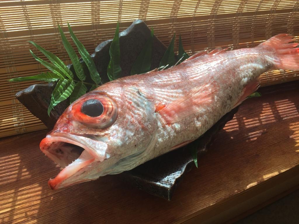 日本海特産 高級魚 のどぐろ