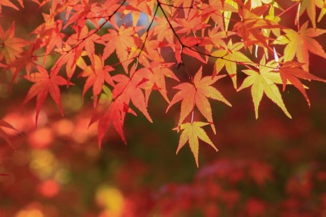 山中湖は秋シーズンがおススメです♪