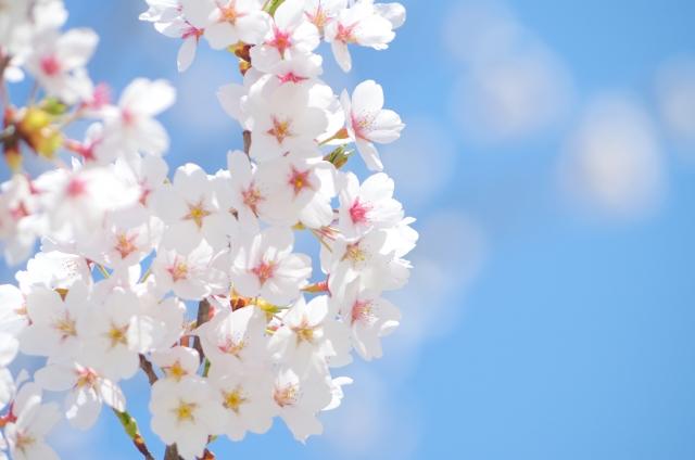 お花見特別プラン