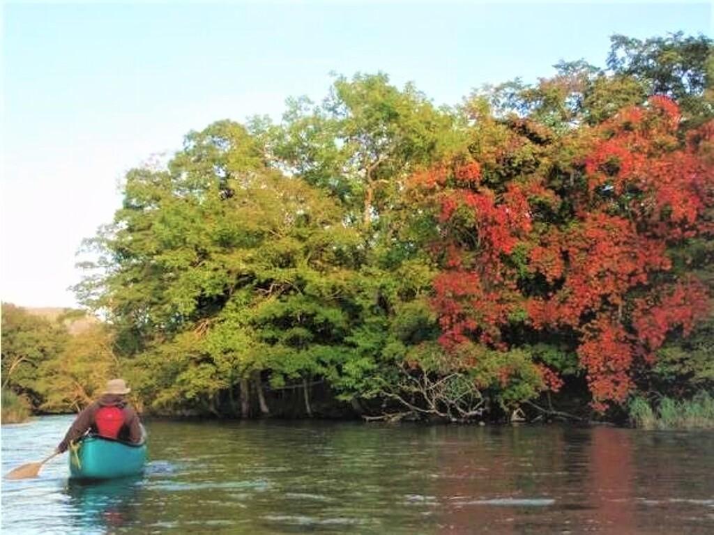 周辺/秋の紅葉