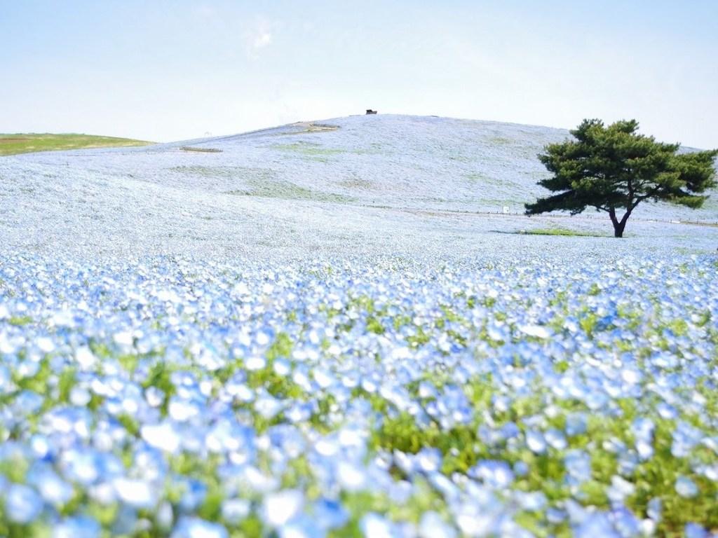 「一度は見たい」青の絶景
