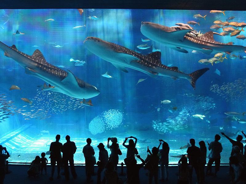沖縄美ら海水族館チケット付きプラン