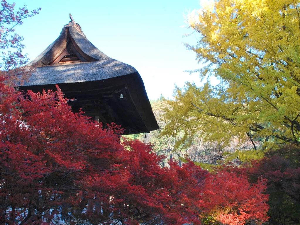 霊松寺の紅葉の様子です。