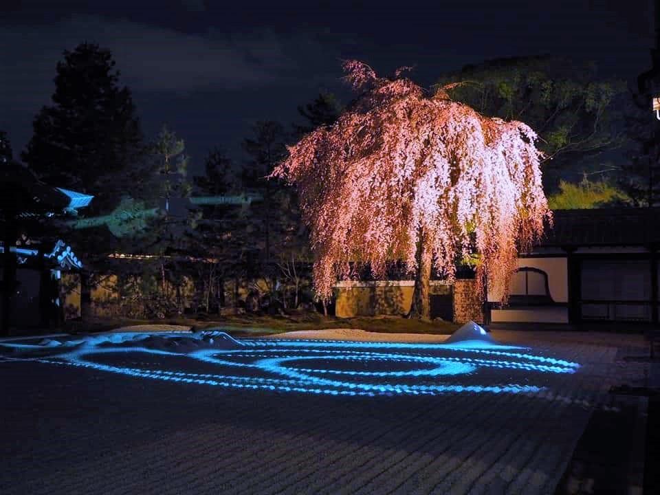 高台寺 ライトアップ(春)1