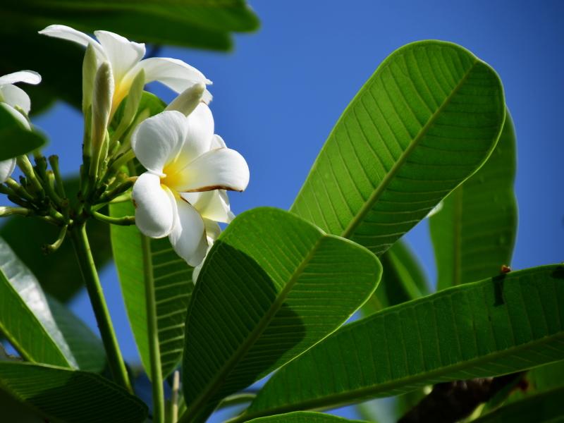 一年を通して沖縄を彩る明るい花々