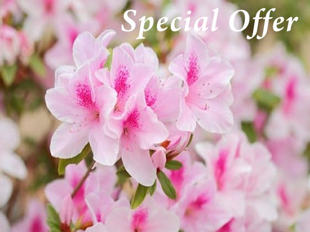 Special Offer tutuzi
