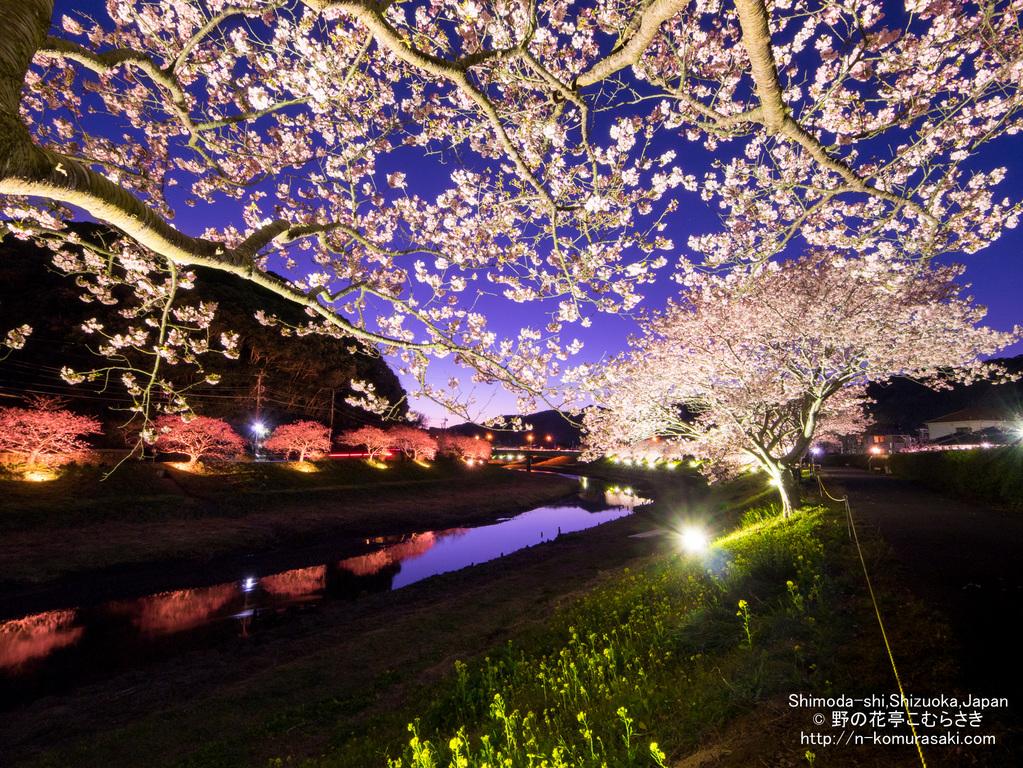 【桜祭り送迎付き スタンダード懐石】みなみの桜と菜の花まつり満喫プラン